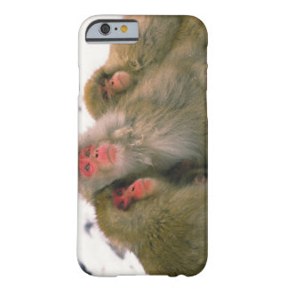Family of Japanese macaque, Jigokudani, Barely There iPhone 6 Case