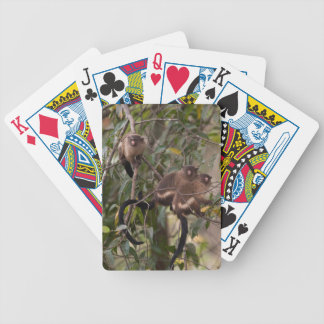 Family of Marmoset Monkeys Bicycle Playing Cards