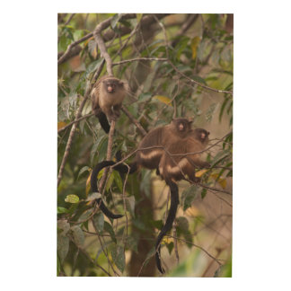 Family of Marmoset Monkeys Wood Wall Art