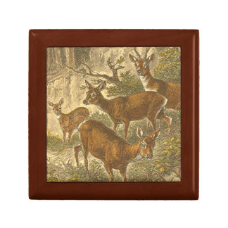 Family of Roe - Deers in a Forest Small Square Gift Box