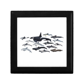 Family of the dolphins: orcas, dolphins, marsopas small square gift box