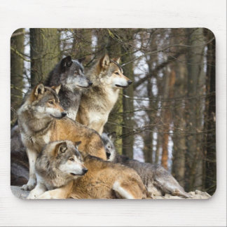 Family of Wolves Mouse Mat
