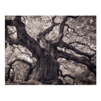 Family Tree Nature's Old Mighty Wisdom L Postcard
