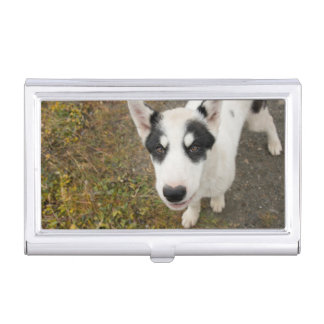 Famous Greenlandic sled dog, black and white puppy Business Card Holder