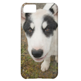 Famous Greenlandic sled dog, black and white puppy iPhone 5C Case