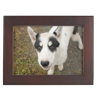 Famous Greenlandic sled dog, black and white puppy Keepsake Box
