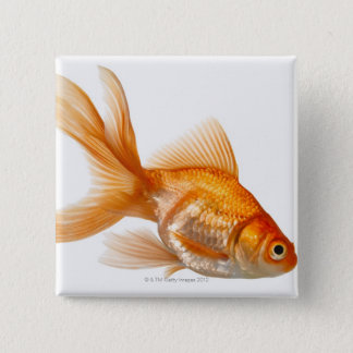 Fancy Goldfish 15 Cm Square Badge