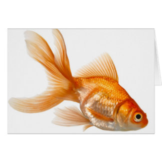 Fancy Goldfish Card
