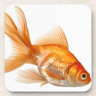 Fancy Goldfish Drink Coasters