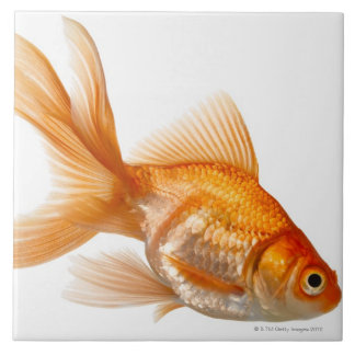Fancy Goldfish Tile