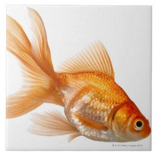 Fancy Goldfish Tiles