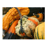 Fancy Gourds Nature Photography Postcard