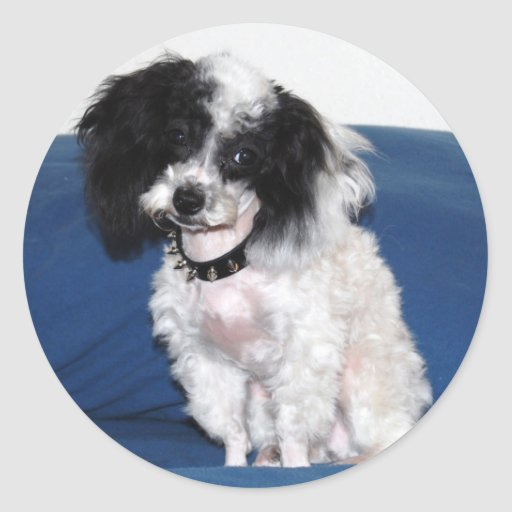 Fancy Parti Toy Poodle Portrait Round Sticker