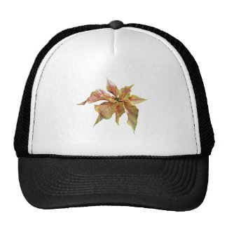 Fancy Pink and Yellow Poinsettia Trucker Hats