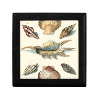 Fancy Shell Beach Small Square Gift Box