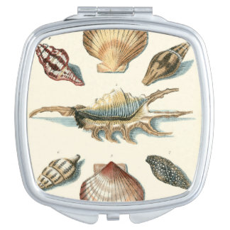 Fancy Shell Beach Vanity Mirror