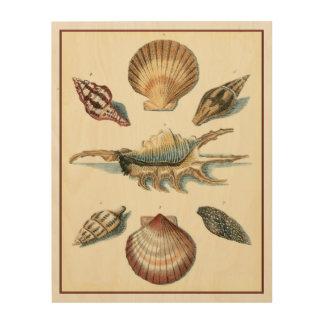 Fancy Shell Beach Wood Print