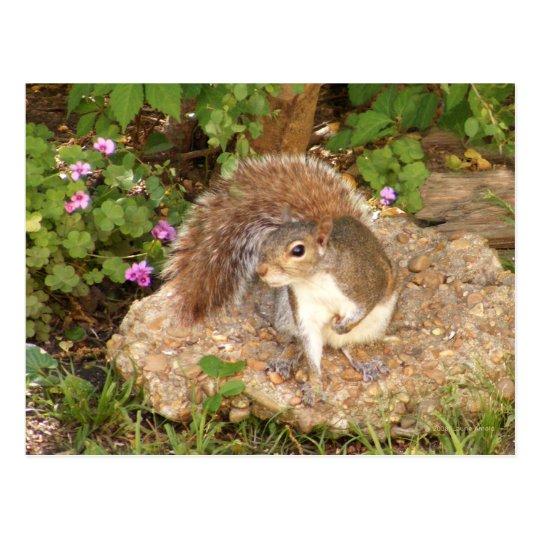 Fancy Squirrel Postcard
