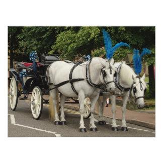 Fancy Wedding Horses Photo Art