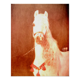 Fancy White Circus Pony Vintage Gypsy Style Poster