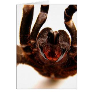 Fangs - Tarantula Art Image 2 Card