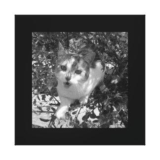 Fangy Cat in Tree / Canvas Art