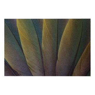 Fanned Buffon'S Macaw Feathers Wood Wall Decor