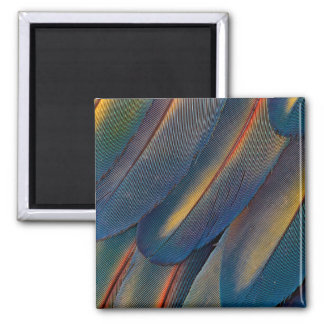 Fanned Out Scarlet Macaw Feathers Magnet