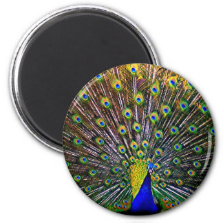 Fanning Peacock - Round Magnet