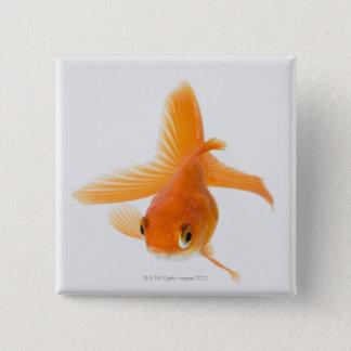 Fantail goldfish (Carassius auratus) 15 Cm Square Badge