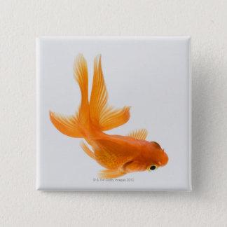 Fantail goldfish (Carassius auratus) 2 15 Cm Square Badge