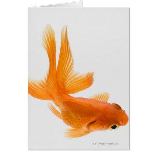 Fantail goldfish (Carassius auratus) 2 Card