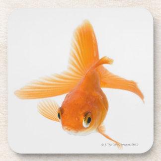 Fantail goldfish (Carassius auratus) Beverage Coasters