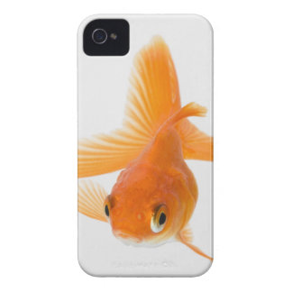 Fantail goldfish (Carassius auratus) Case-Mate iPhone 4 Case