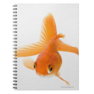 Fantail goldfish (Carassius auratus) Notebook