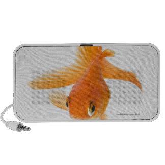 Fantail goldfish (Carassius auratus) Notebook Speakers