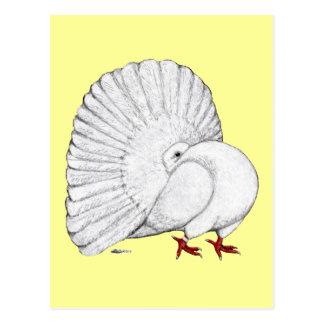 Fantail:  White Postcard