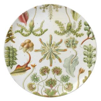 Fantastic Flora Plates