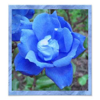 Fantasy Blue Rose Digital Print Wall Art Photograph