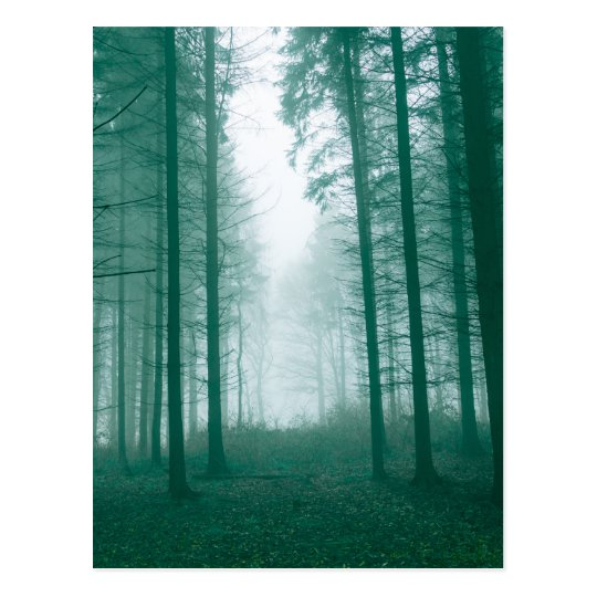 Fantasy forest with fog in Green Postcard