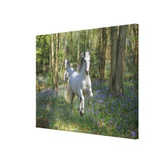Fantasy Horses: Bluebell Wood Canvas Print
