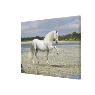 Fantasy Horses: Lord of the Lake Canvas Print