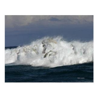 Fantasy Horses: Sea Postcard