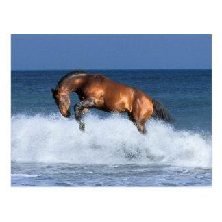 Fantasy Horses: Selle Francais & Sea Postcard