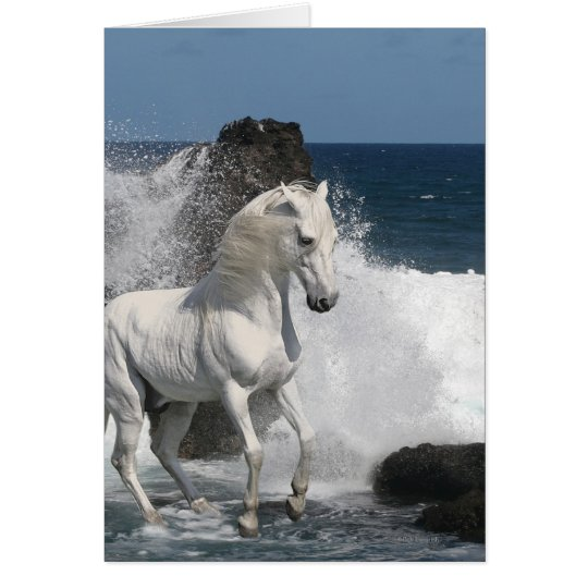 Fantasy Horses: Southern Seas Card