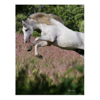 Fantasy Horses: Spring Gallop Postcard