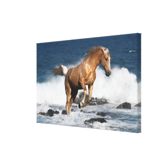 Fantasy Horses: Summer Splash Canvas Print