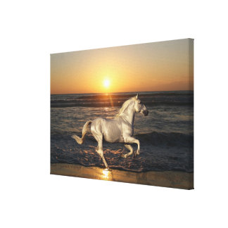 Fantasy Horses: Sunset Canvas Print