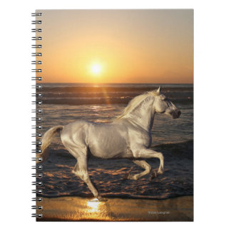 Fantasy Horses: Sunset Notebook