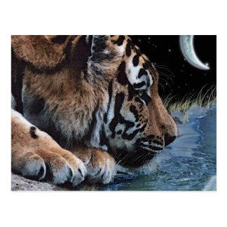Fantasy Tiger Moon Postcards